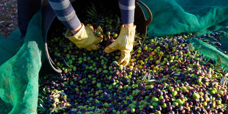 MOROCCO: Olive oil waste treatment plant to be built in Ouezzane©Abed Rahim Khatib/Shutterstock