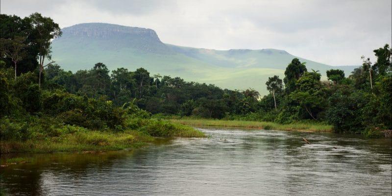 AFRIQUE CENTRALE : la Comifac veut mobiliser des fonds pour préserver sa biodiversité©Sergey Uryadnikov Shutterstock