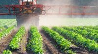 AFRICA: Scientists warn against neonicotinoid insecticides©CanettiShutterstock