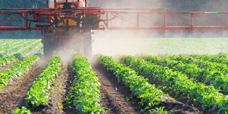 AFRIQUE : des scientifiques mettent en garde contre les insecticides néonicotinoïdes©CanettiShutterstock