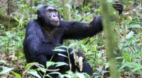 AFRIQUE DE L'OUEST : un observatoire régional de la biodiversité voit le jour©JordiStockShutterstock