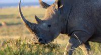 CÔTE D'IVOIRE : plus de 200 espèces animales sont menacées d'extinction ©jonanderswikenShutterstock