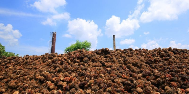 IVORY COAST: Concession contract signed for the Ayebo biomass power plant©wattana/Shutterstock
