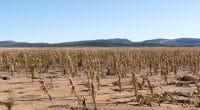 AFRIQUE AUSTRALE : la sécurité alimentaire est menacée par la sècheresse©WildesideShutterstock