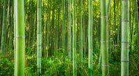 CENTRAL AFRICA: INBAR promotes bamboo and rattan as an alternative to wood©Patryk KosmiderShutterstock