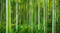 AFRIQUE CENTRALE : Inbar vante le bambou et le rotin comme alternative au bois©Patryk KosmiderShutterstock