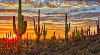 MADAGASCAR : les plantes de cactus font décupler la production de biogaz©Anton FoltinShutterstock