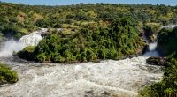 UGANDA: Government relaunches Murchison Falls hydroelectric project©Dennis Wegewijs/Shutterstock