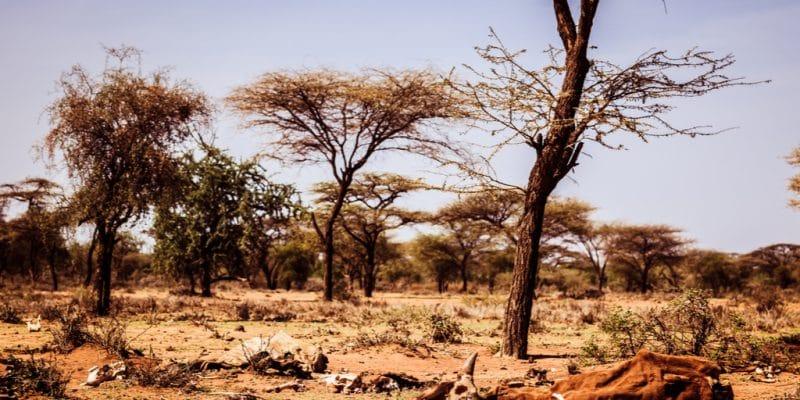 AFRICA: EU provides grant to African Adaptation Initiative ©Geerte Verduijn/Shutterstock