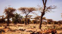 AFRIQUE : l'UE accorde une subvention à l'Initiative d'adaptation pour l'Afrique©Geerte Verduijn/Shutterstock