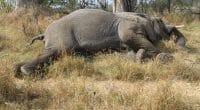 CAMEROUN : près de 84000 € pour protéger la biodiversité dans 7 localités du Nord©Nora MarieShutterstock