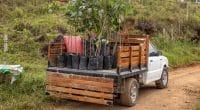 OUGANDA : un club de foot allemand plante les arbres, pour protéger l'environnement