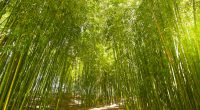 CONGO: €152 million project for the promotion of bamboo products©SpiritProd33/Shutterstock