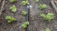 MALI : une innovation permet de réduire de 80 %, la consommation d'eau en agriculture©Peter Titmuss Shutterstock