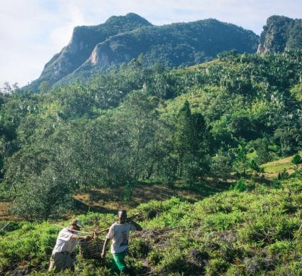 TANZANIA: French Group Rossignol to plant 25,000 trees©Farid Suhaimi/Shutterstock