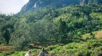 TANZANIE : Le groupe français Rossignol va planter 25000 arbres©Farid Suhaimi/Shutterstock