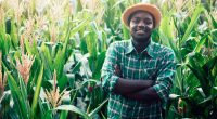 WEST AFRICA: Germany will finance agro-ecology to the tune of €16 million©arrowsmith2/Shutterstock
