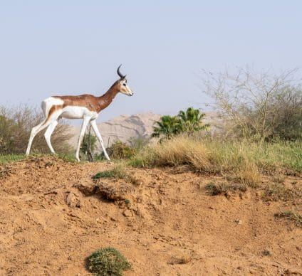 NIGER: EU and AFD earmark €8.5M for the preservation of the Termit nature reserve©Jeff KingmaDe Shutterstock