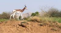 NIGER : l'UE et l'AFD débloquent 8,5 M€ pour préserver la réserve naturelle de Termit©Jeff KingmaDeShutterstock