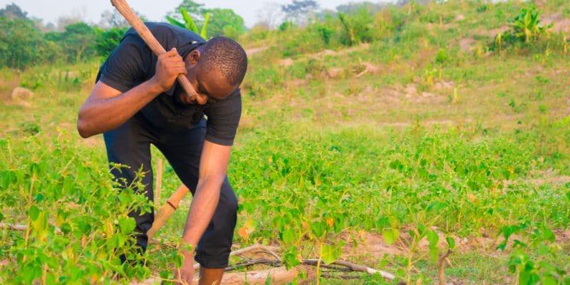 AFRIQUE DE L'EST : Slow Food impliquera les jeunes dans l'agro-écologie via un projet ©courage007/Shutterstock
