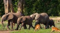 CENTRAL AFRICA: A stela for biodiversity conservation in Sangha©GUDKOV ANDREY/Shutterstock