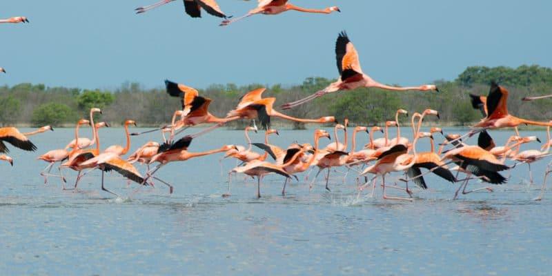 KENYA: Millions of flamingoes threatened by deforestation©Maria Castellanos of Shutterstock