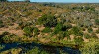 AFRIQUE : le programme Copernicea, pour comptabilisation du patrimoine écologique©Foto 4440/Shutterstock