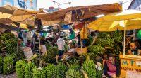 OUGANDA : l'Union européenne subventionne l'économie verte à hauteur de 90,4 M€©DstockIL/Shutterstock