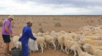 AFRIQUE DU SUD : un plan d'urgence agricole contre la sécheresse au Cap-Occidental©Kobus Smit/Shutterstock