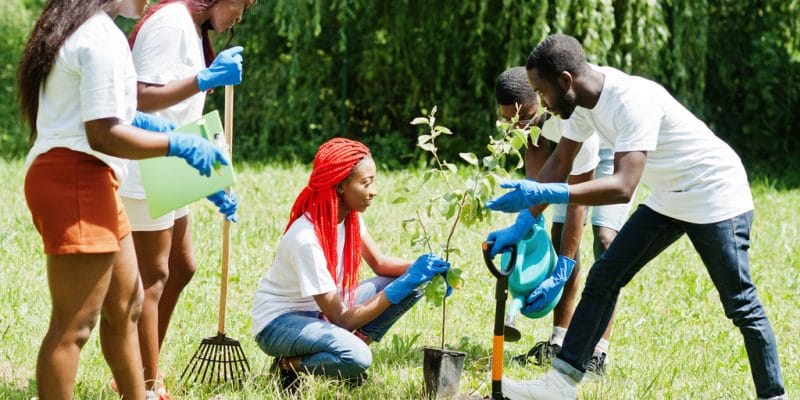 MADAGASCAR: 60 million trees to be planted for 60 years of independence©AS photo studio/Shutterstock