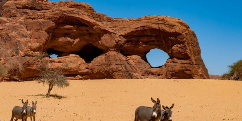 KENYA: Government bans killing of donkeys threatened by Chinese trade©Beata TabakShutterstock