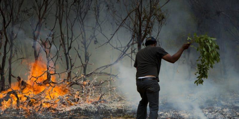 MADAGASCAR : réactivation du 512 pour la dénonciation des crimes environnementaux©Lindsay Basson/Shutterstock