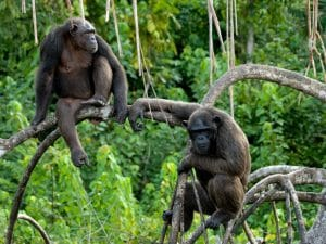 CONGO: Noé association now manages Conkouati-Douli national park