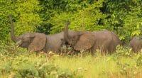 CONGO : l'association Noé obtient la gestion du parc national de Conkouati-Douli©edeantoine/Shutterstock