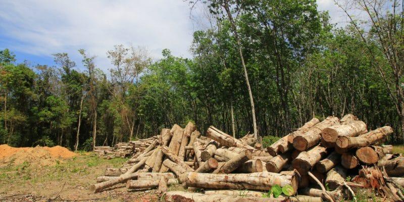 DRC: Butanisation, a solution to reduce deforestation©Rich Carey/Shutterstock