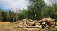 RDC : la butanisation, une solution pour lutter contre la déforestation©Rich Carey/Shutterstock
