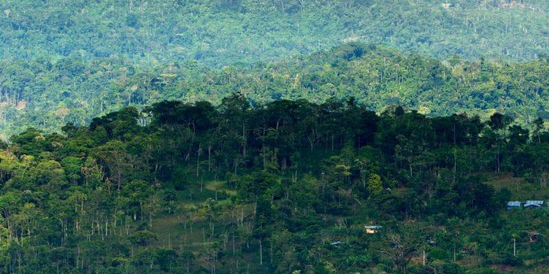 CONGO : Greenpeace s'oppose à l'attribution de 9 concessions forestières©Ammit Jack/Shutterstock