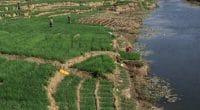 TCHAD : lancement du projet de sauvegarde de l'environnement dans le bassin du Niger ©Torsten Pursche/Shutterstock