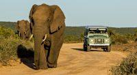KENYA : la fermeture des parcs due au Covid-19 met la faune sauvage en danger©Carcharadon/Shutterstock