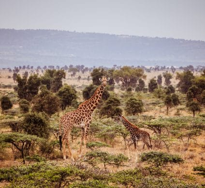 CENTRAL AFRICA: Training eco-guards in protected area management©Geertes/Shutterstock