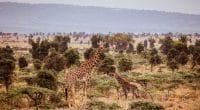 AFRIQUE CENTRALE : les écogardes formés à la gestion des aires protégées©Geertes/Shutterstock