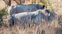 TOGO-BÉNIN : ScanTogo et CIMBénin lèvent 39600 € pour protéger la réserve du Mono©lkpro / Shutterstock