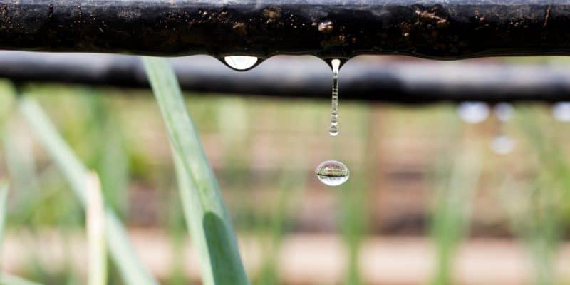 TUNISIE : l'Utap va former 150 agriculteurs pour mieux gérer les ressources en eau©Fotosr52 / Shutterstock