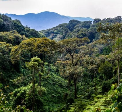 RWANDA: Camera traps to survey biodiversity in Nyungwe Park©Zaruba Ondrej/Shutterstock