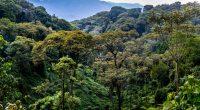 RWANDA : des pièges photographiques pour recenser la biodiversité du parc de Nyungwe© Tetyana Dotsenko/Shutterstock