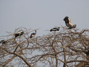 BENIN: APN to rehabilitate Pendjari National Park in the north-west