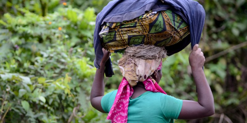 DRC: Confined local residents allowed to collect food in Virunga Park. ©wayak/Shutterstock
