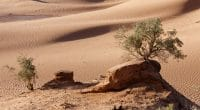 AFRIQUE : pour le maintien de la chute des émissions de CO2 occasionnée par le Covid19©Miroslaw Skorka/Shutterstock