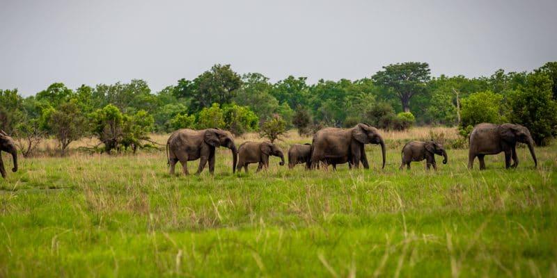 BÉNIN : APN réhabilitera le parc national de la Pendjari situé au nord-ouest du pays©Gilles COMLANVI/Shutterstock