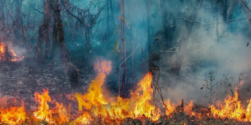AFRIQUE : la capacité des forêts tropicales à absorber le CO2 est en nette diminution©Toa55/Shutterstock